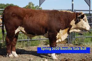 Case Beeville Sale Bull 802