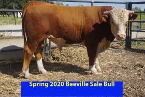 Case Beeville Sale Bull 814